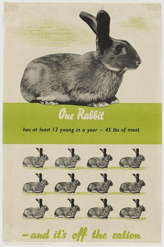 élevage lapins